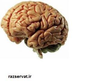 تکنیک های ذهنی مغز