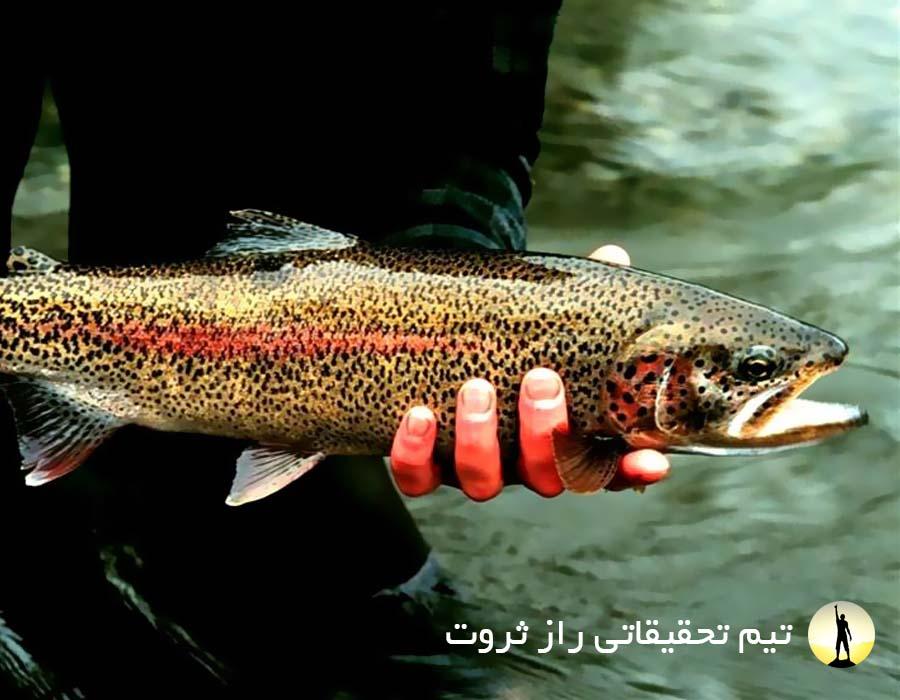 روش های پرورش ماهی