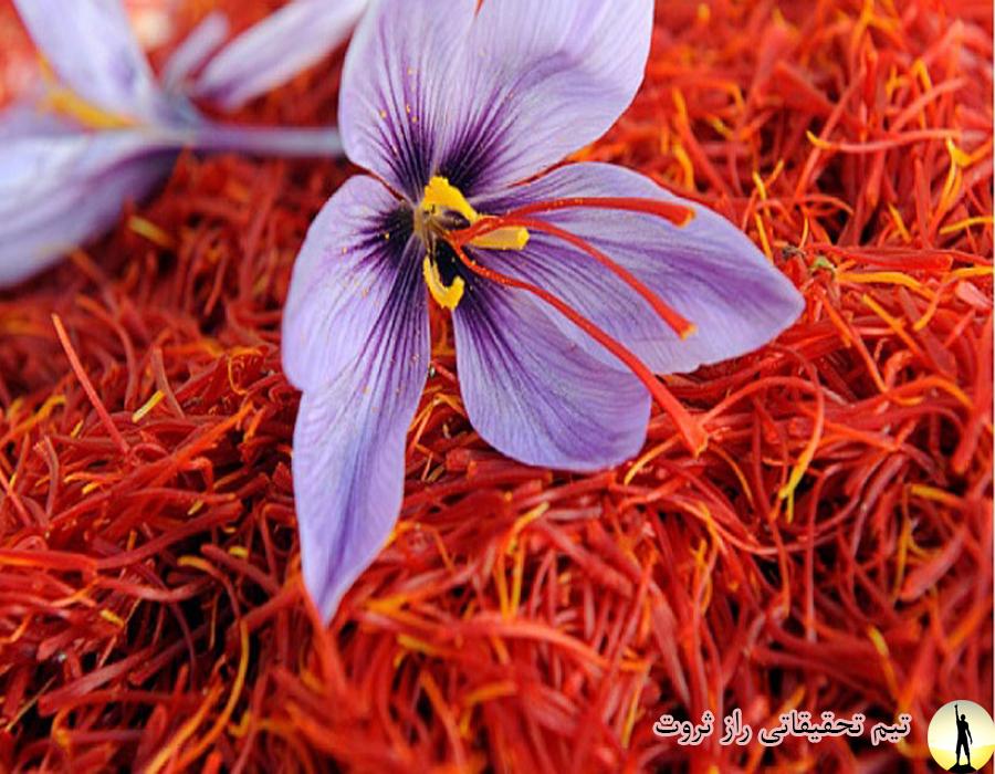خواص و مضرات گیاه زعفران