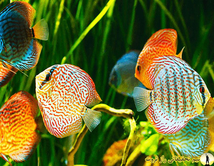 ماهی های اکواریومی و نگهداریشان