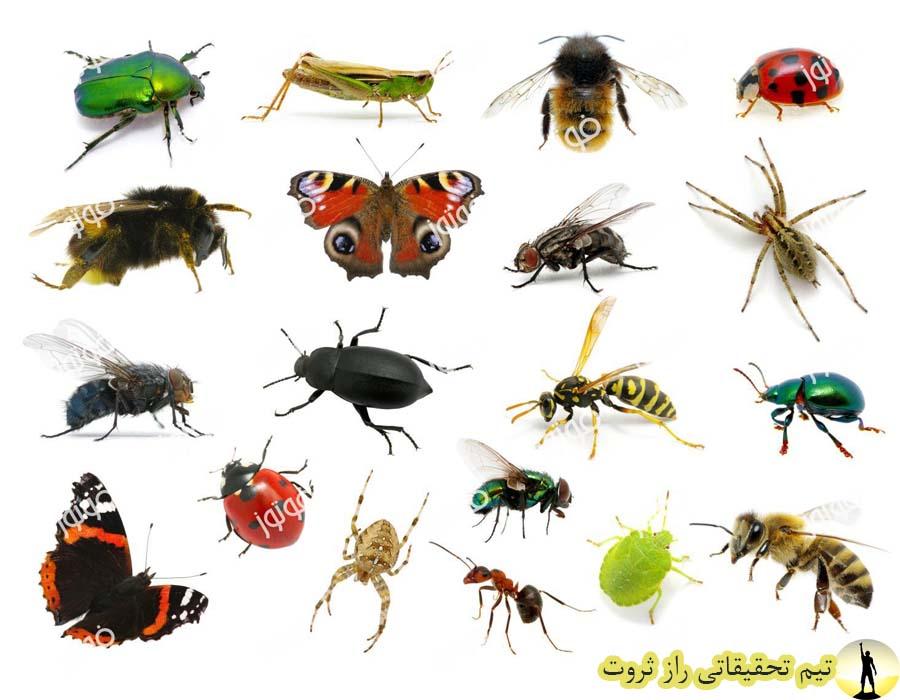 انواع حشرات و راه دفع انها