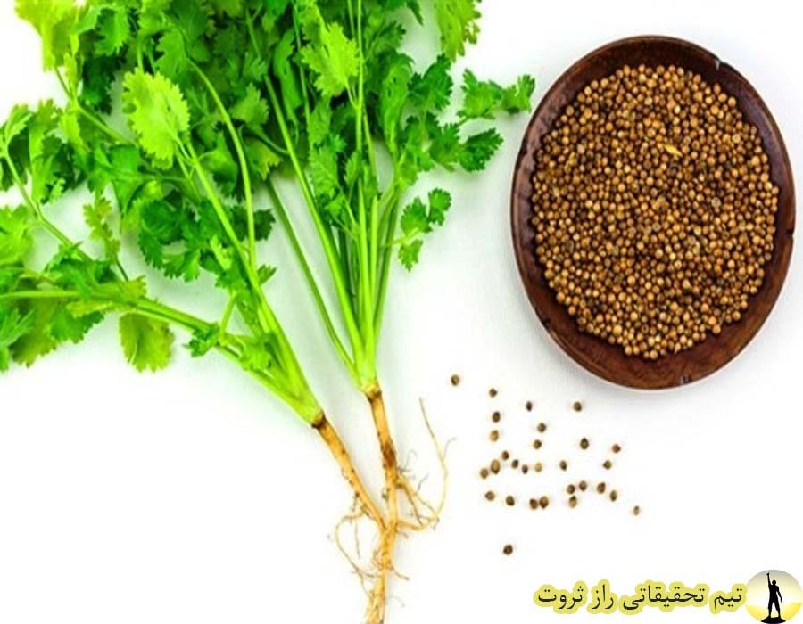 خاصیت درمانی گیاه معجزه اسا