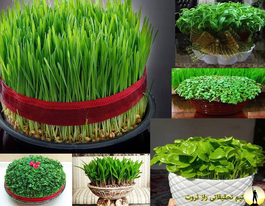 روش کاشت انواع سبزه عید